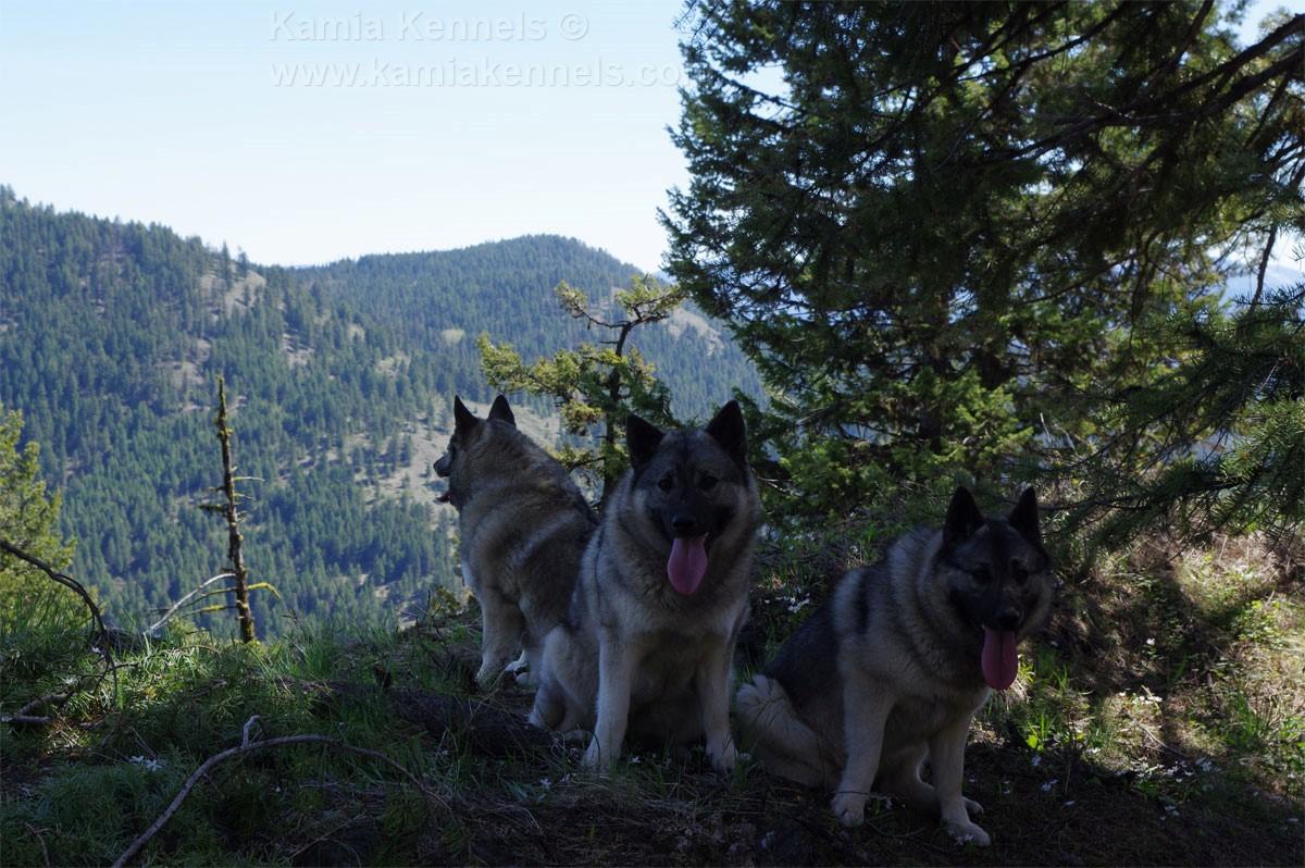 Tora, Tekla and Tuva