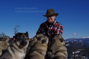 Merv Carlson Founder of Kamia Kennels and Six Elkhounds
