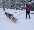 Swedish Elkhounds