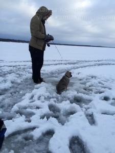Ice Fishing Norwegian Elkhound