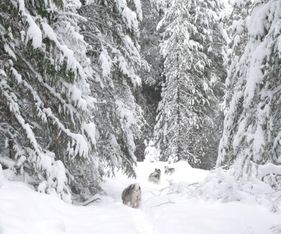 A great winter Elkhound Adventure